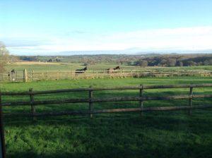 Hollins Court Farm2