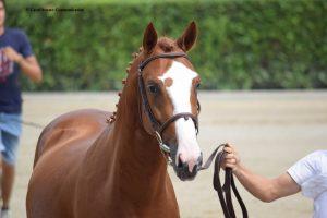 Sul progetto per la valorizzazione del cavallo italiano FISE-MiPAAF
