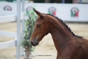 Sul progetto per la valorizzazione del cavallo italiano FISE-MiPAAF 3