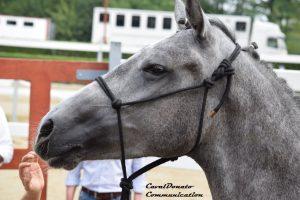 Quanto conosci il tuo cavallo? Horsenality, prospettive e limiti 1