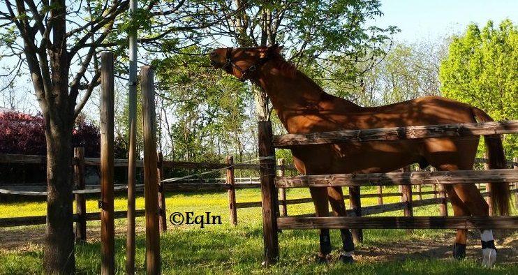 campo di perdita di peso a cavallo