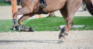 Qualità del terreno di lavoro e salute del cavallo: alcune considerazioni