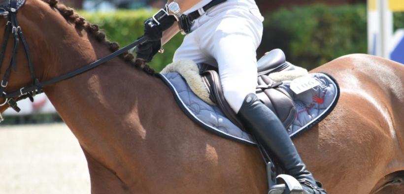 Accordo Mipaaft-Fise: verso lo sviluppo e la valorizzazione del cavallo sportivo italiano 1