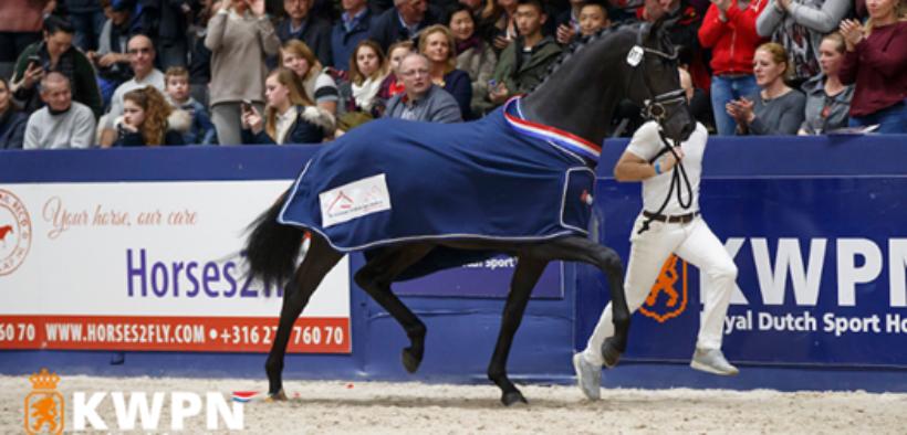 KWPN Stallion Horse Show 2019, Le Formidable è il re!