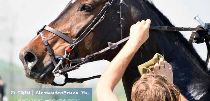 Vademecum delle buone abitudini di gestione del cavallo