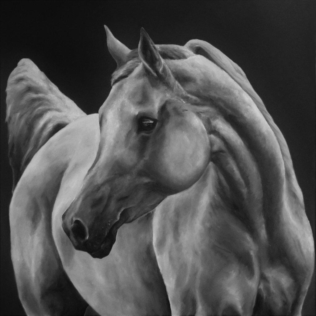 I cavalli nei dipinti di Francesca Provetti: due passioni che s'incontrano 5