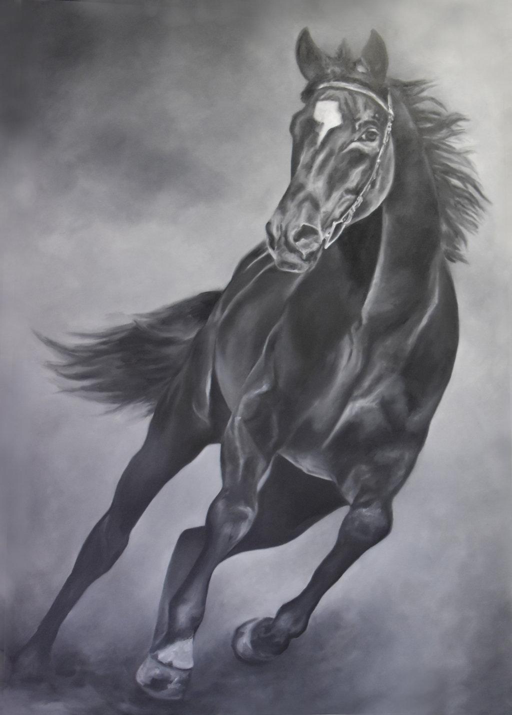 I cavalli nei dipinti di Francesca Provetti: due passioni che s'incontrano