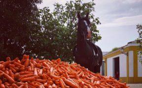 Carote e dolcetti ai cavalli? Certo, ma con moderazione