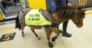 Digby, il 1° mini horse-guida in metropolitana!