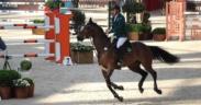 Raffaele Valente per Gaudiano Sport Horses