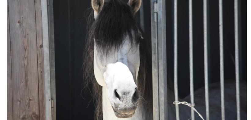 Diritto Equestre: e se il proprietario del cavallo sparisce? 1