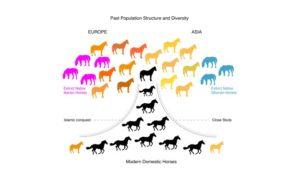 Il DNA del cavallo antico racconta: resistenza al posto della velocità, meno difetti congeniti