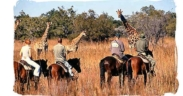 Il safari in Sudafrica quest'estate si farà a cavallo!