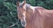 Come impara il cavallo? Principi e applicazioni nel quotidiano