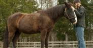 La sindrome di Cushing nel cavallo: identificazione e cure