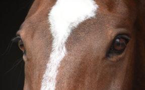 Un dono da ogni cavallo? Yes, of course 1