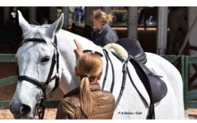 Stare in sicurezza vicino al cavallo: alcune regole di base