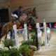 CSIO5* Calgary, Bucci al top nella Six Bars ATCO Electric