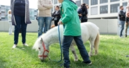 "Fieracavalli, con Riding the blue ""il cavallo giova all'autismo"""