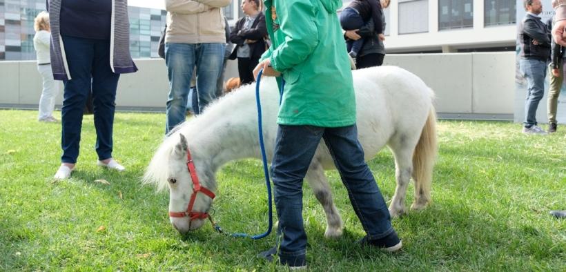 """Fieracavalli, con Riding the blue """"il cavallo giova all'autismo"""""""