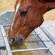 Sindrome daulcera gastrica nel cavallo, cos'è e come prevenirla
