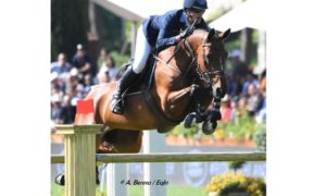 Top Jumping Horses: Toveks Mary Lou 2
