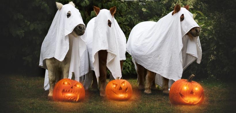 Equine Halloween, che spettacolo!