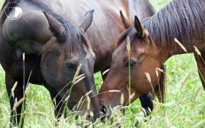 Arrivati gli esiti dei 3 cavalli improvvisamente deceduti a Volterra - Italian Horse Protection