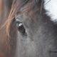 Di Cuore in Cuore, progetto di recupero di cavalli anziani o/a fine carriera