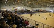 Fiere, Roma e Verona unite per la promozione del comparto equestre