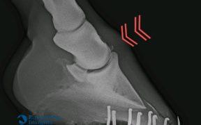 L'osteocondrosi giovanile nei cavalli: di che cosa si tratta?
