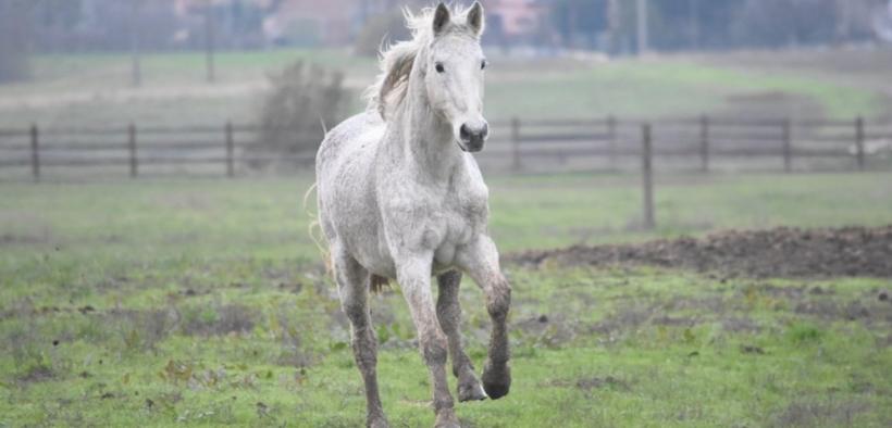 Ha dell'incredibile! Ecco gli 8 cavalli più anziani della storia