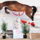 Il 18 gennaio in scena a Lier la BWP Top Stallion Auction