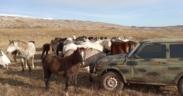 "Tra gli indomabili ""Kalaša"", i cavalli selvaggi della Bosnia Erzegovina"
