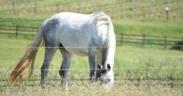E' possibile confrontare il proprio cavallo con altri? Sì, grazie ad E-BARQ (Equine Behavior Assessment Research Questionnaire) 1