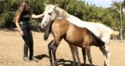 Horsemanship con i puledri: L'esperienza del Rancho de Los Cielos