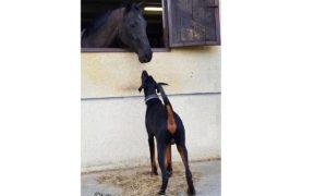 Cane e cavallo insieme... in uno scritto del 1400