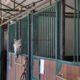 Coronavirus, è emergenza per molti pony e cavalli della scuola