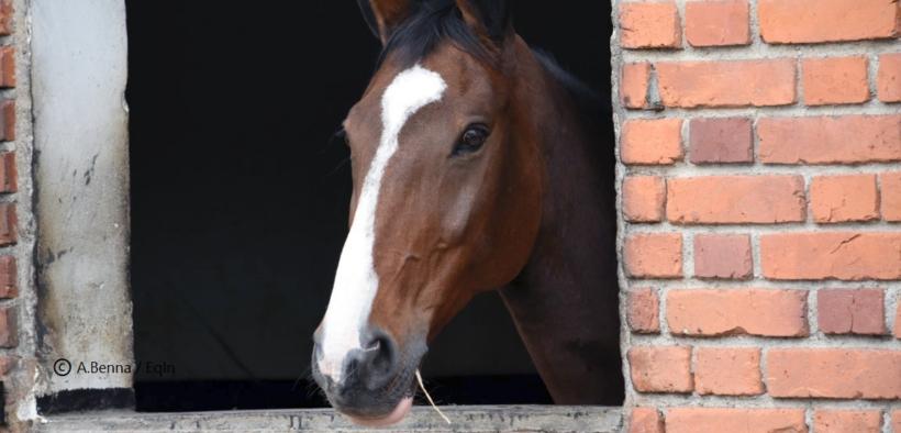 Coronavirus: in scuderia solo e unicamente per provvedere alle cure e alla salute del cavallo