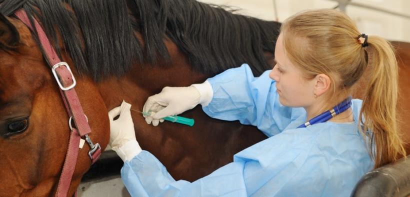 COVID-19 - Equestrians, così non va: lasciate in pace i veterinari 2