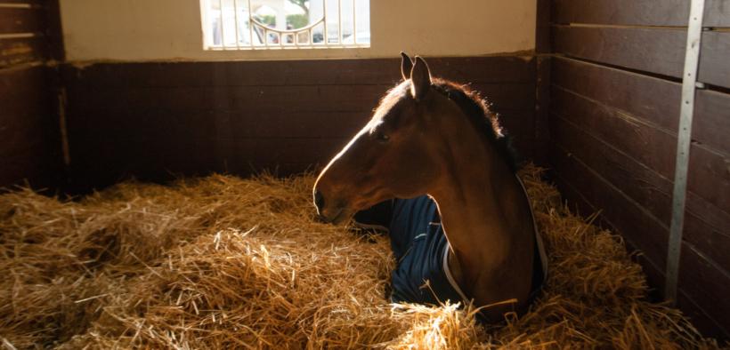 """""""Dorme in piedi come i cavalli""""... vero o falso? 1"""