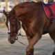 FISE nella lettera aperta ai tesserati: NON si può montare o muovere i cavalli