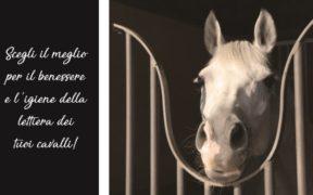 Goldspan Official Supplier della Federazione Italiana Sport Equestri