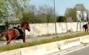 Ecco cos'è successo ai cavalli in fuga sul viale dell'aeroporto di Linate [video]
