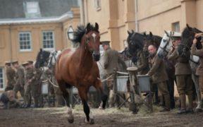 """Spielberg: """"Il cavallo Joey rappresenta il buon senso, se la gente avesse più buon senso""""... 1"""