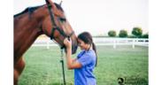 Il cavallo che ci aiuta: con attività mirate, per molti indispensabili