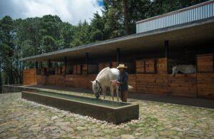 Architettura e design per le strutture equestri: sogni che diventano realtà 2