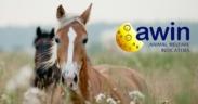 Ecco il Protocollo AWIN per la valutazione del benessere dei cavalli 6