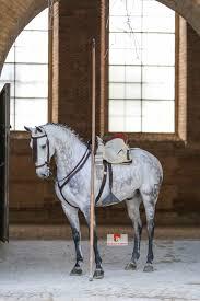 Alla scoperta dei cavalli iberici: andalusi e lusitani 2