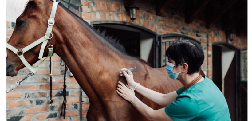 Coronavirus: in Argentina sperimentano sui cavalli